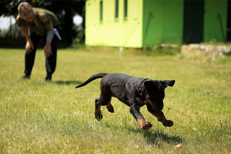 puppy-fetch-training